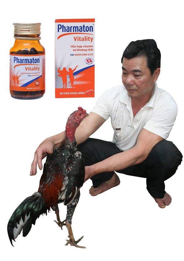 Những điều chú ý khi cho gà uống pharmaton trước khi đá